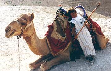Junger Kamelhirte in Israel vor einem Kamel in der Wüste.